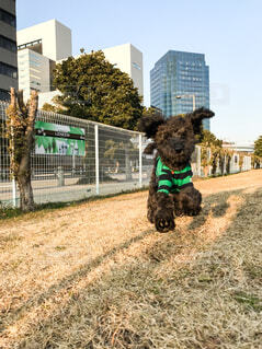 空気中のジャンプ犬の写真・画像素材[969804]