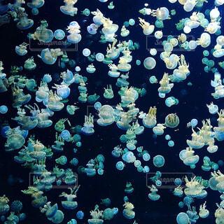 クラゲの写真・画像素材[1608154]
