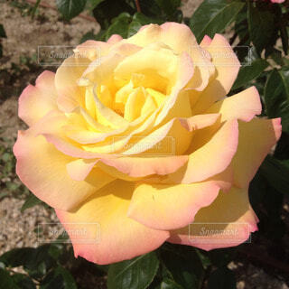 花の写真・画像素材[54676]