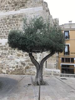 建物の前にツリーの写真・画像素材[855098]