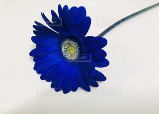 近くの花のアップの写真・画像素材[1660952]