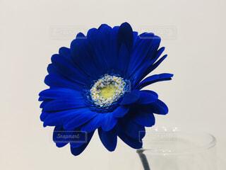 青いデイジー ガラスの写真・画像素材[1660958]