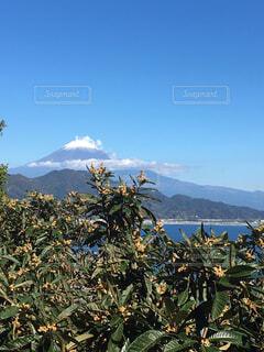 背景の山と木の写真・画像素材[1619470]