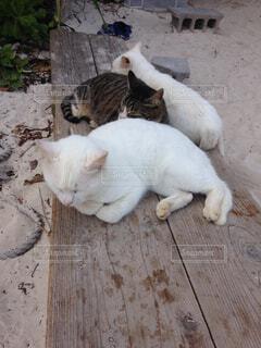 猫たちの写真・画像素材[1610197]
