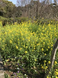 黄色の花の写真・画像素材[1610307]