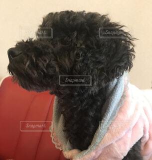 とても可愛い保護犬の子ですの写真・画像素材[1610897]