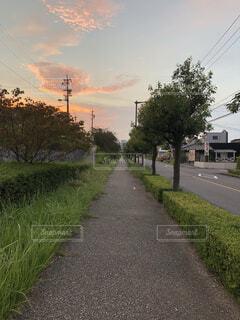 道の端に木のパスの写真・画像素材[1609900]