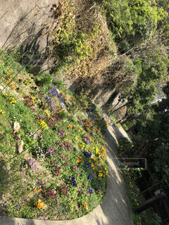 花の道の写真・画像素材[1622056]