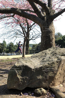 大きな岩の前に木の写真・画像素材[1050274]