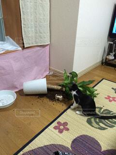 反省する猫の写真・画像素材[1610842]