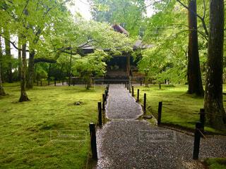 苔庭と歩道の写真・画像素材[1612302]