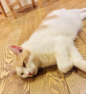 猫の写真・画像素材[1631251]