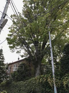 世田谷代田のおしゃれなカフェとツリーの写真・画像素材[1615457]