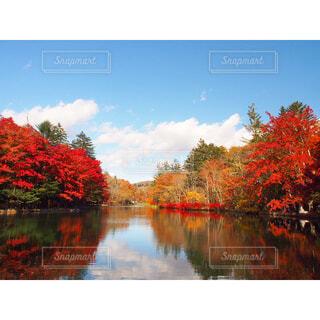 水に映る紅葉の写真・画像素材[1613776]