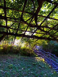 光へ続く自然のトンネルの写真・画像素材[4826152]