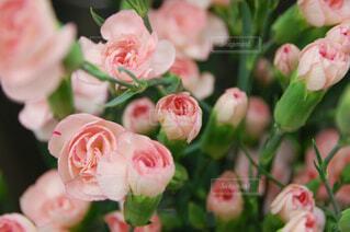 近くの花のアップの写真・画像素材[1614490]