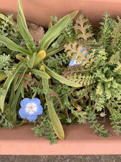 青い花の写真・画像素材[1796252]