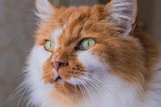 近くに猫のアップの写真・画像素材[1620350]
