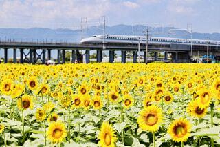 近くに黄色い花のアップの写真・画像素材[1633017]