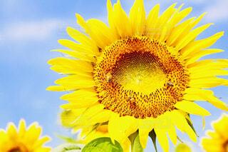 黄色の花の写真・画像素材[1633018]
