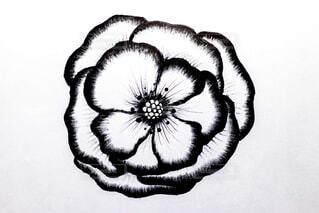 花の写真・画像素材[1661856]