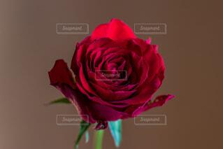 花瓶の花束の写真・画像素材[1666413]