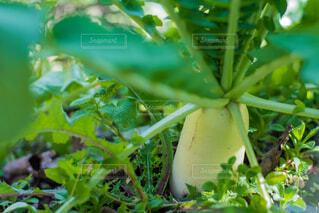 近くの緑の植物をの写真・画像素材[1681119]