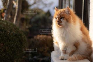 カメラを見ている猫の写真・画像素材[1695180]