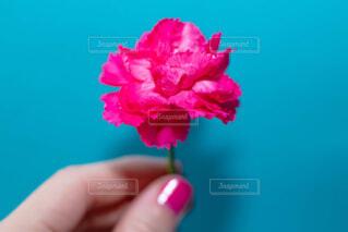 花を持っている手の写真・画像素材[1716782]