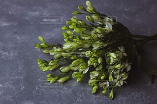 緑の植物の写真・画像素材[1717187]