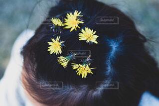 近くに黄色い花のアップの写真・画像素材[1726676]