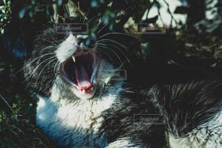 近くに猫のアップの写真・画像素材[1824144]