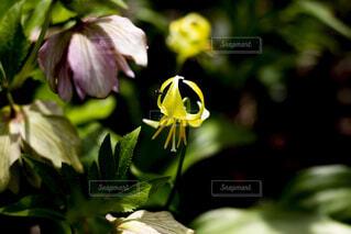 緑の葉の黄色い花の写真・画像素材[2122272]