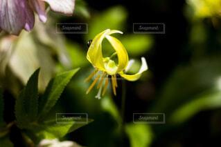 花のクローズアップの写真・画像素材[2122273]