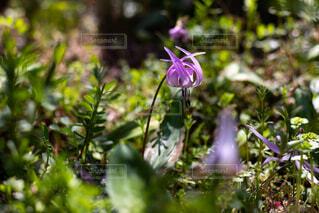 花のクローズアップの写真・画像素材[2122274]