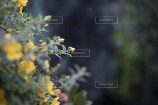 花のクローズアップの写真・画像素材[2230307]