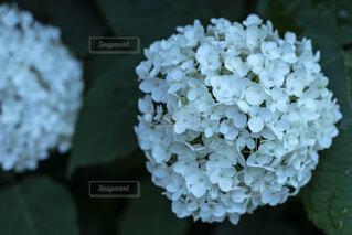 花のクローズアップの写真・画像素材[2230310]