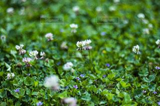 花園のクローズアップの写真・画像素材[2230312]