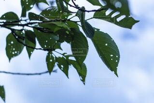 木の上に座っている鳥の群れの写真・画像素材[2230313]