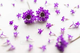 紫色の花のクローズアップの写真・画像素材[2264614]