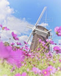 風車とコスモスの写真・画像素材[1626885]