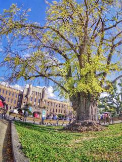 イチョウの木の写真・画像素材[1653283]