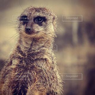 動物のクローズアップの写真・画像素材[2261535]