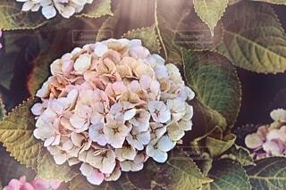 花のクローズアップの写真・画像素材[2274118]