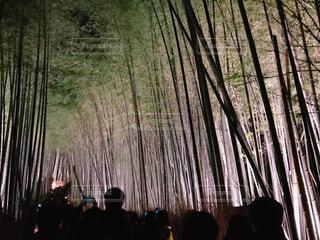 竹林のライトアップの写真・画像素材[2106007]