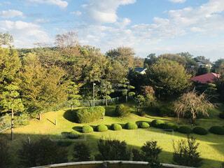 庭園の緑の植物の写真・画像素材[1617606]