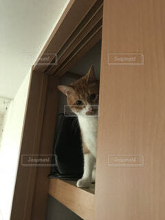ドアの上に座っている猫の写真・画像素材[1617959]