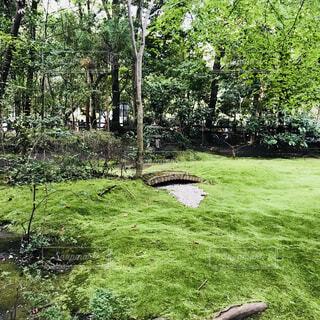 苔の庭の写真・画像素材[1617969]