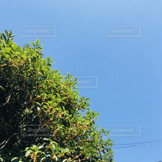 茂みや木のグループの写真・画像素材[1618025]