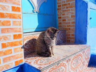 建物の上に座っている猫の写真・画像素材[1618373]